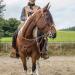 Reitausbildung zum Bridle Horse in Anlehnung an die klassisch-kalifornische Tradition mit Rolf Schönswetter