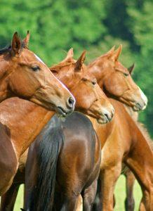 Pferde- und Reitausbildung