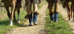 Back to the Roots – gemeinsam den Weg »pro Pferd« gehen.