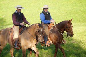 Gelassene Pferde in der Hackamore und den Two-Reins.