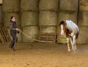 Pferdeausbildung am Boden über Körpersprache