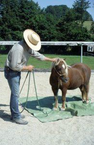 Bodenarbeitstraining – jedes Pferd verdient eine korrekte Ausbildung.