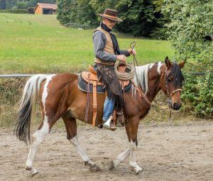 Laterale Stellung OHNE Ausbinder und Hilfszügel: Der faire Weg zur weichen Nachgiebigkeit und Selbsthaltung bei der Ausbildung zum Bridle Horse.