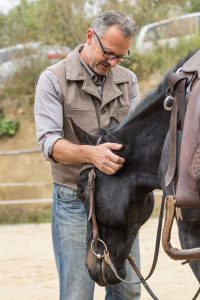 In der Ruhe liegt die Kraft: Häufiges und vor allem ausgewogenes Loben ist der Schlüssel zur Partnerschaft mit dem Pferd.
